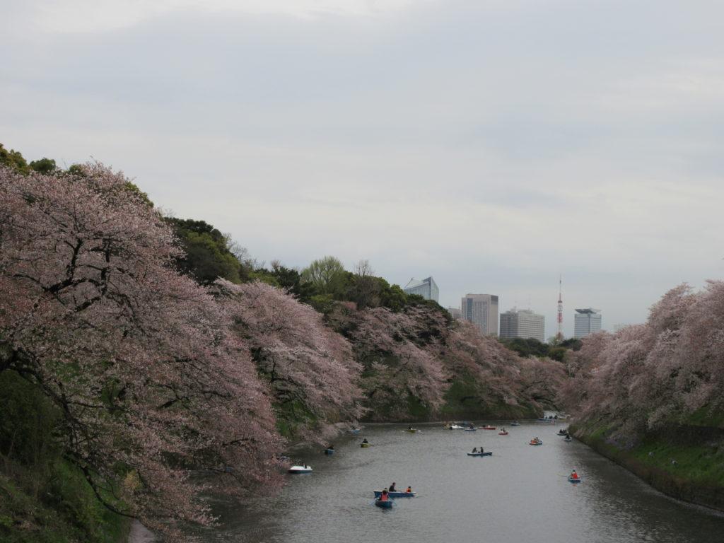 目黒川と千鳥ヶ淵の桜