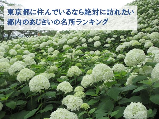 hydrangea-ranking