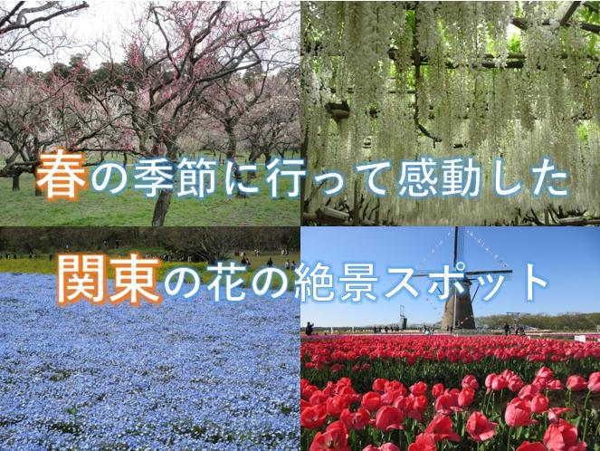 spring-flower-kanto2