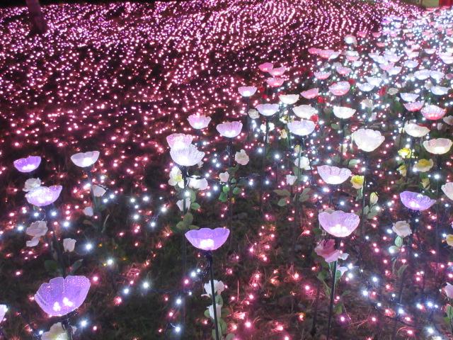 光の花畑に咲いている花
