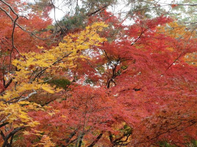 無数に生い茂る赤赤色と黄色の葉