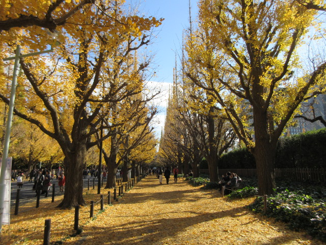 Golden carpet made by deciduous ginkgo biloba