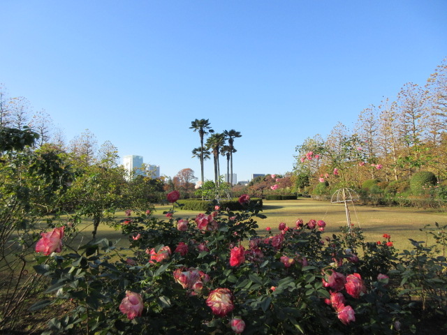 フランス式整形庭園のバラ花壇