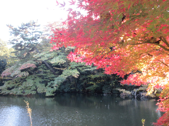 玉藻池と紅葉