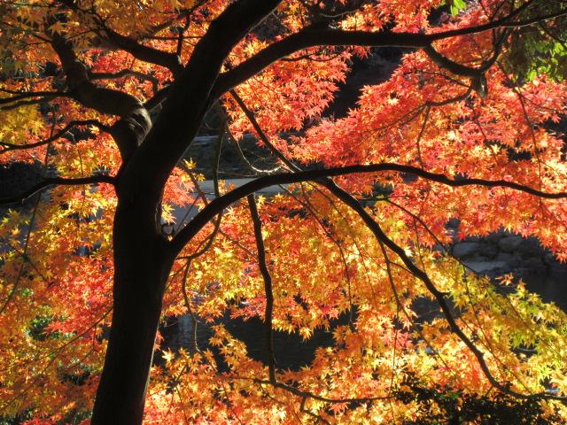 玉藻池の紅葉
