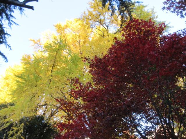 新宿門の紅葉