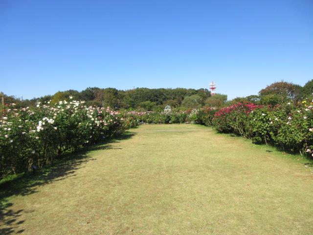 plaza of Keisei Rose Garden