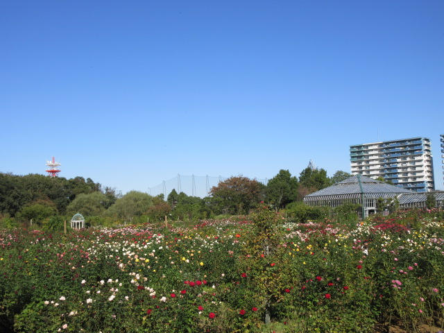 whole picture of Keisei Rose Garden
