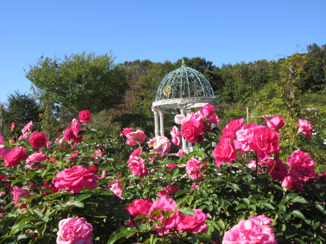 Gazebo and autumn roses in Japan