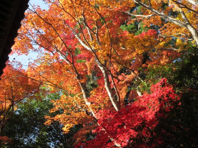 山門の横にある紅葉