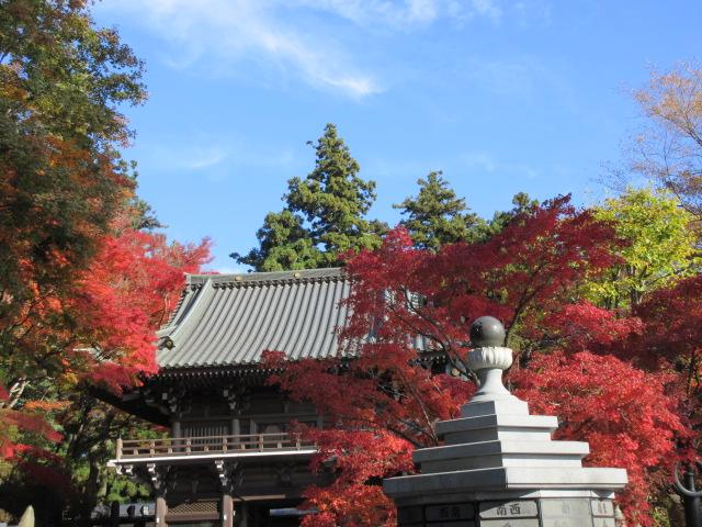 仁王門周辺の紅葉
