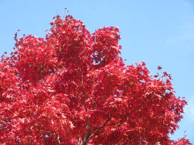 山頂の鮮やかな紅葉