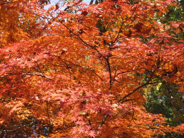 山頂のオレンジ色の葉