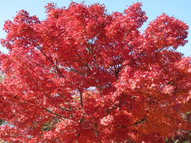 山頂の赤色の葉