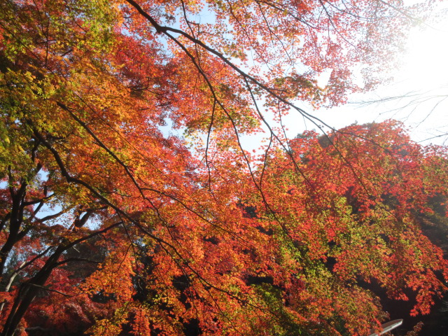 ケーブルカー乗り場の太陽に照らされる紅葉