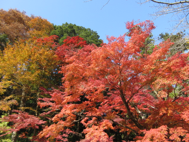 ケーブルカー乗り場の紅葉の全体像