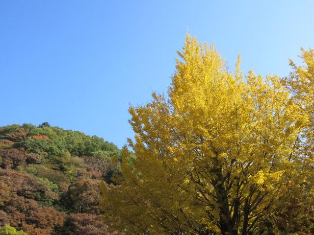 高尾山口駅の紅葉