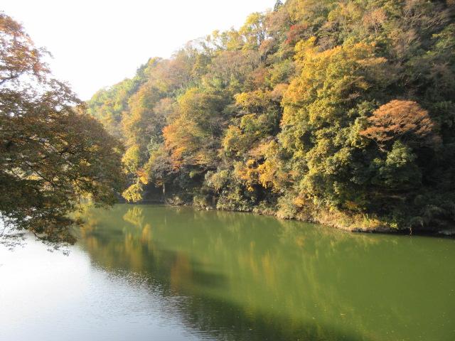 相模川に映る紅葉