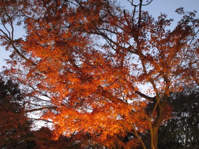 見頃を迎えた六義園の紅葉