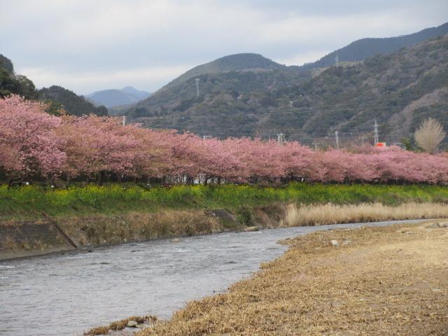 河津川の河川敷から見える風景