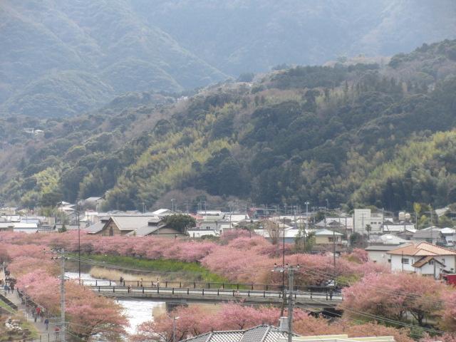 桜見晴らし台