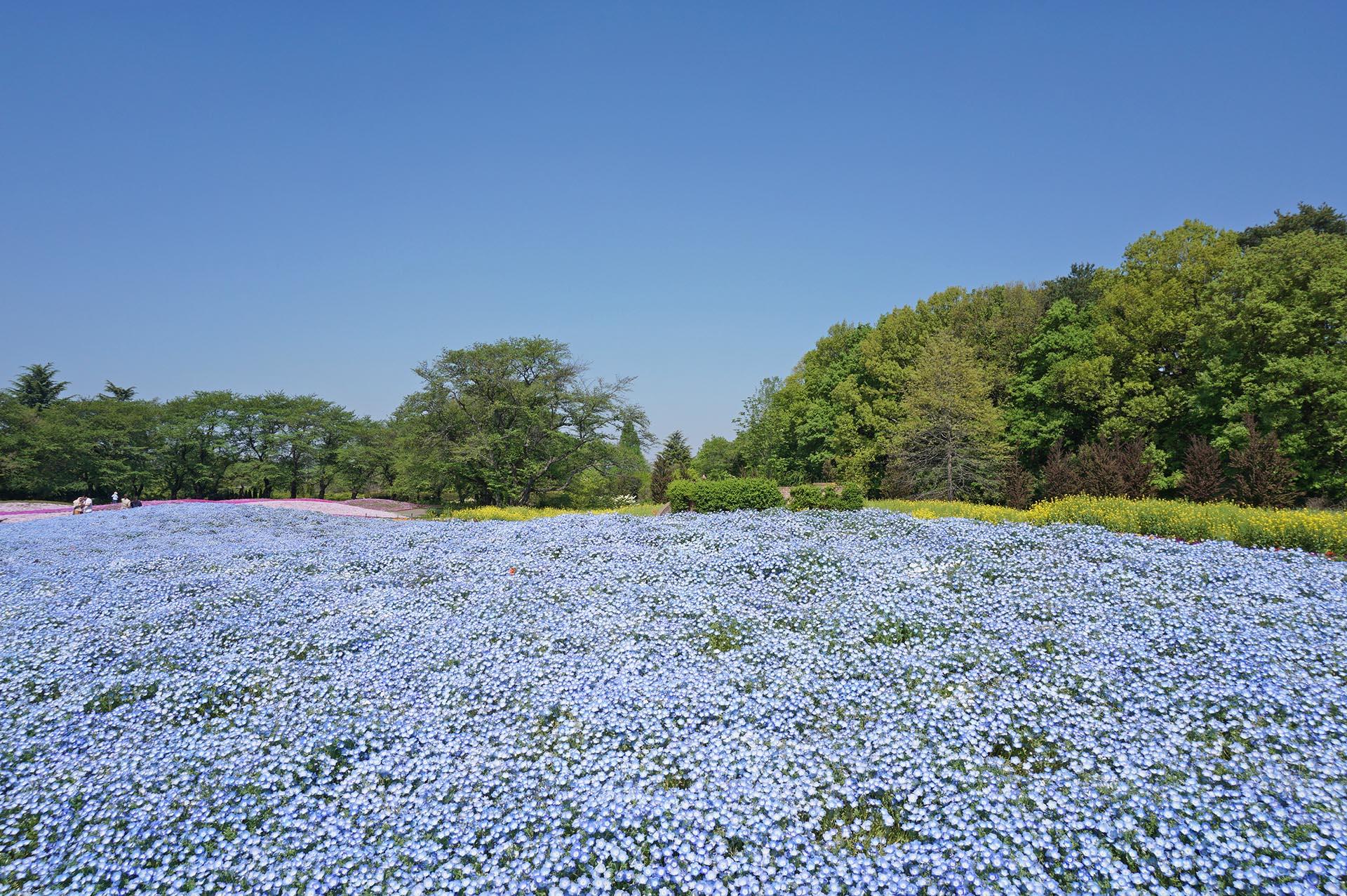 青のガーデン