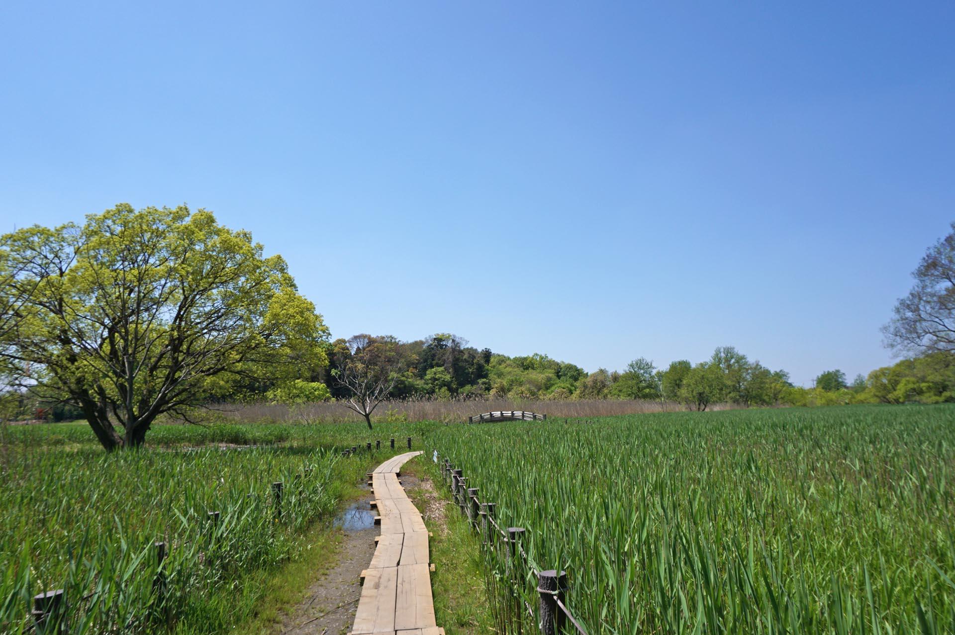 茂林寺沼湿原