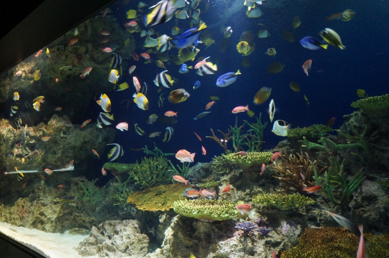 サンゴと色とりどりの魚
