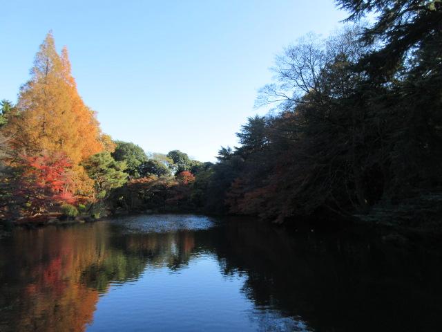 中の池の水面に反射する紅葉