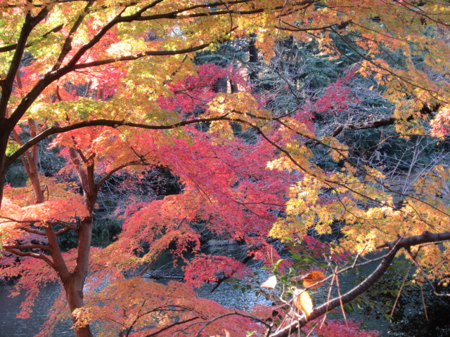 中の池の紅葉