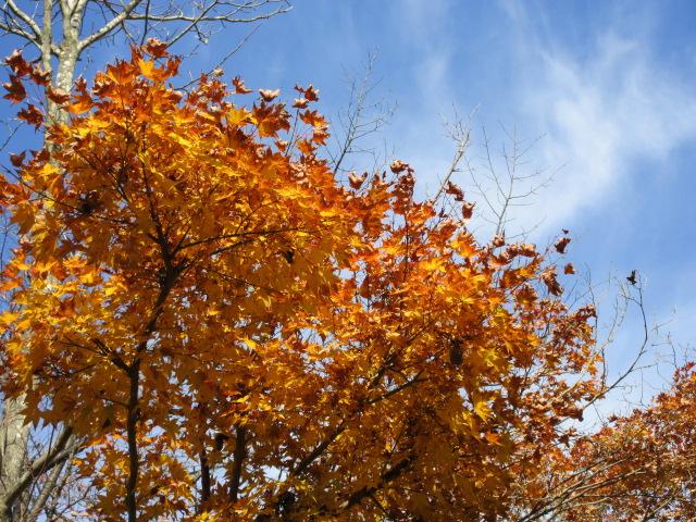 山頂の黄葉