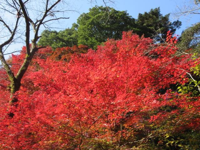 ケーブルカー乗り場の赤色と緑色の葉