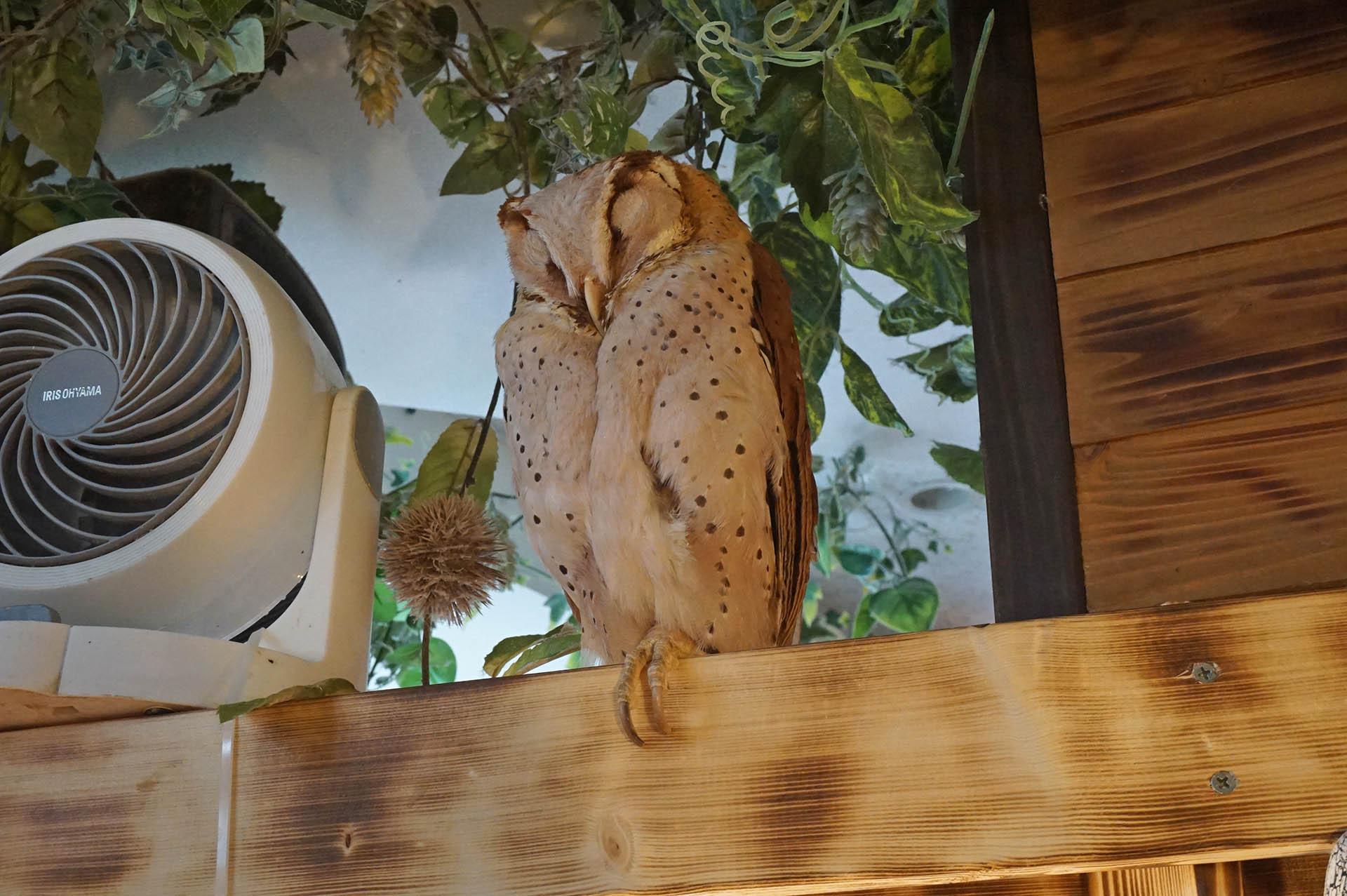 フクロウカフェ「アウルの森」