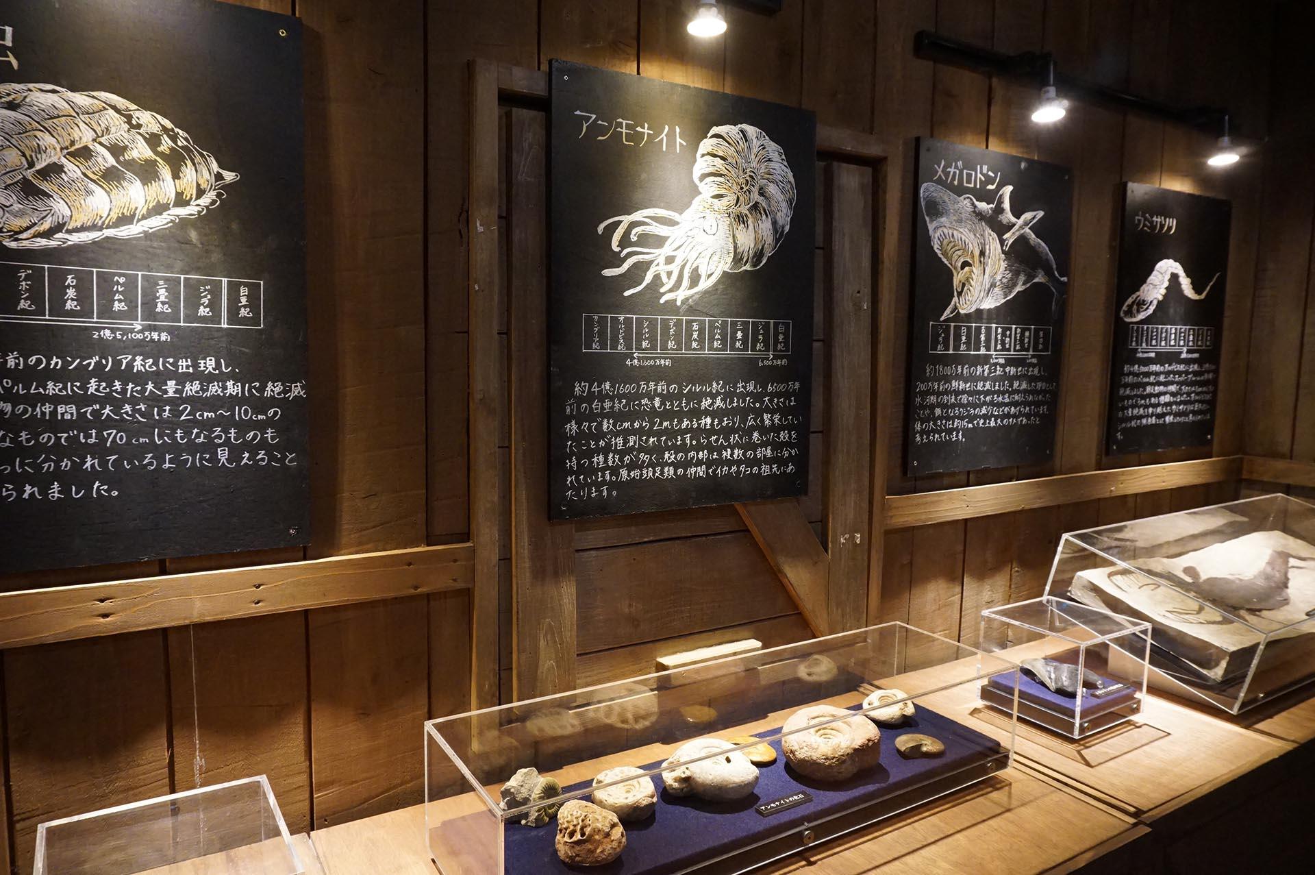 沼津港深海水族館の古代生物の展示