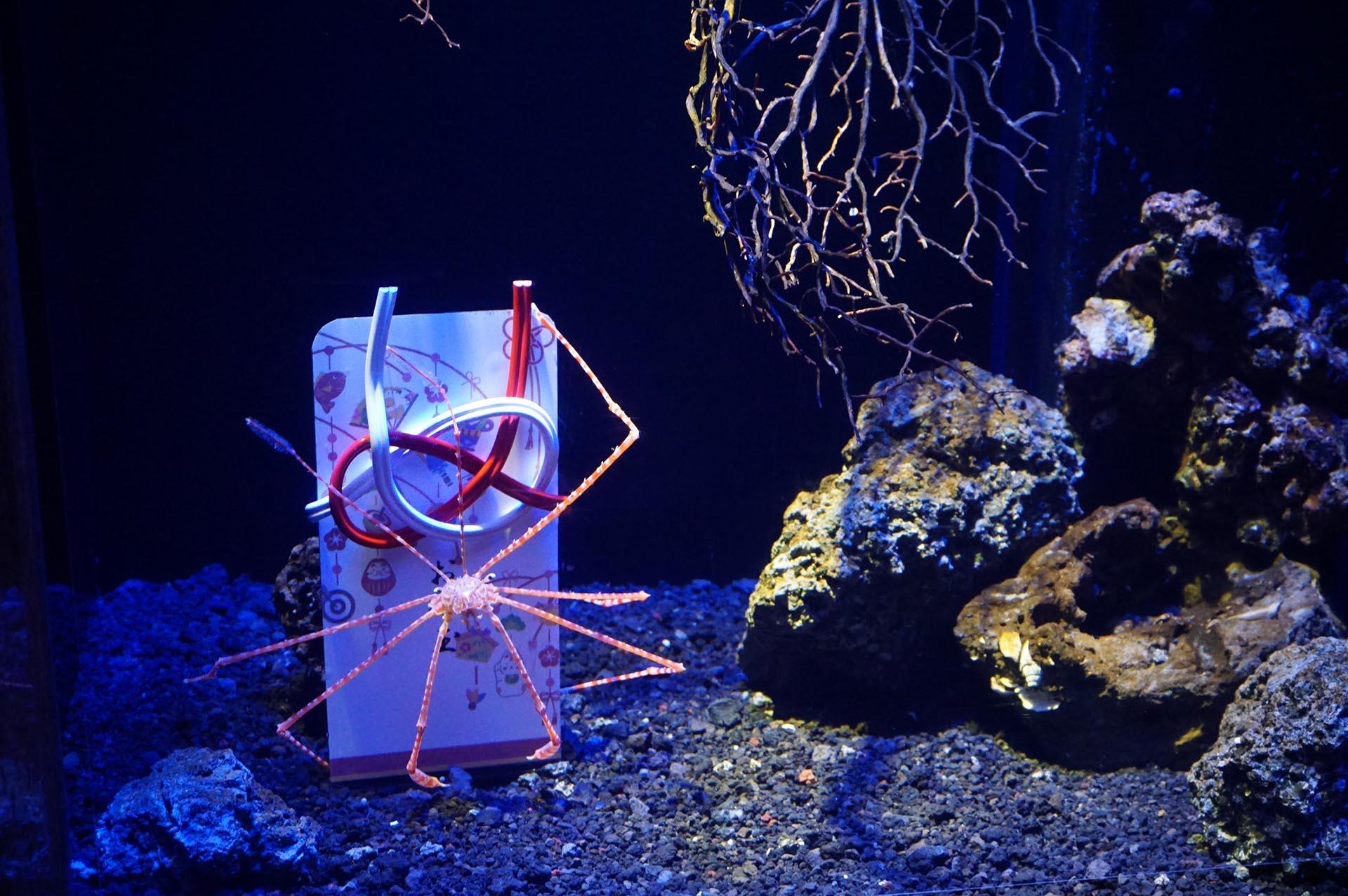 沼津港深海水族館の魚