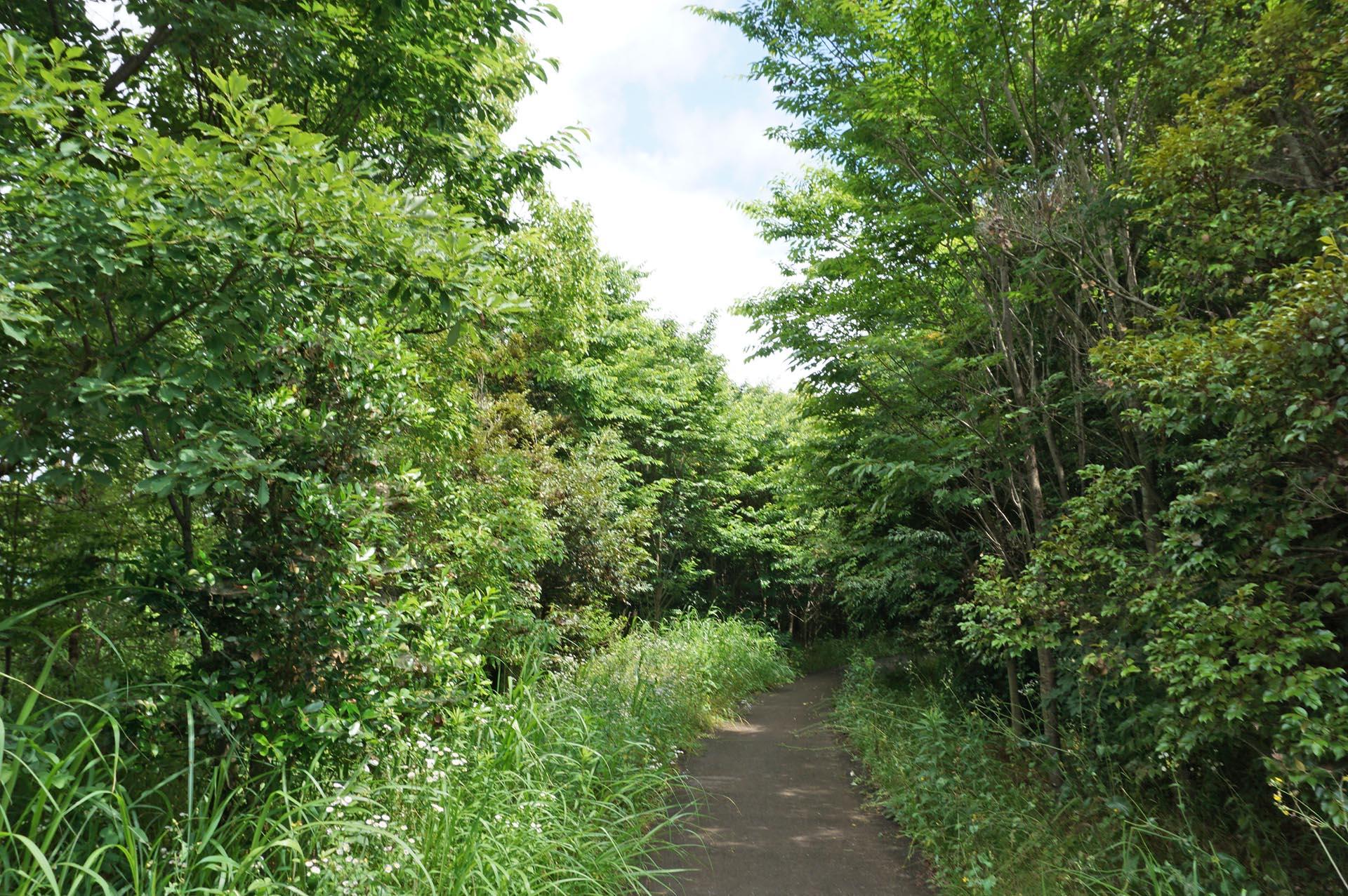 古代植物の森