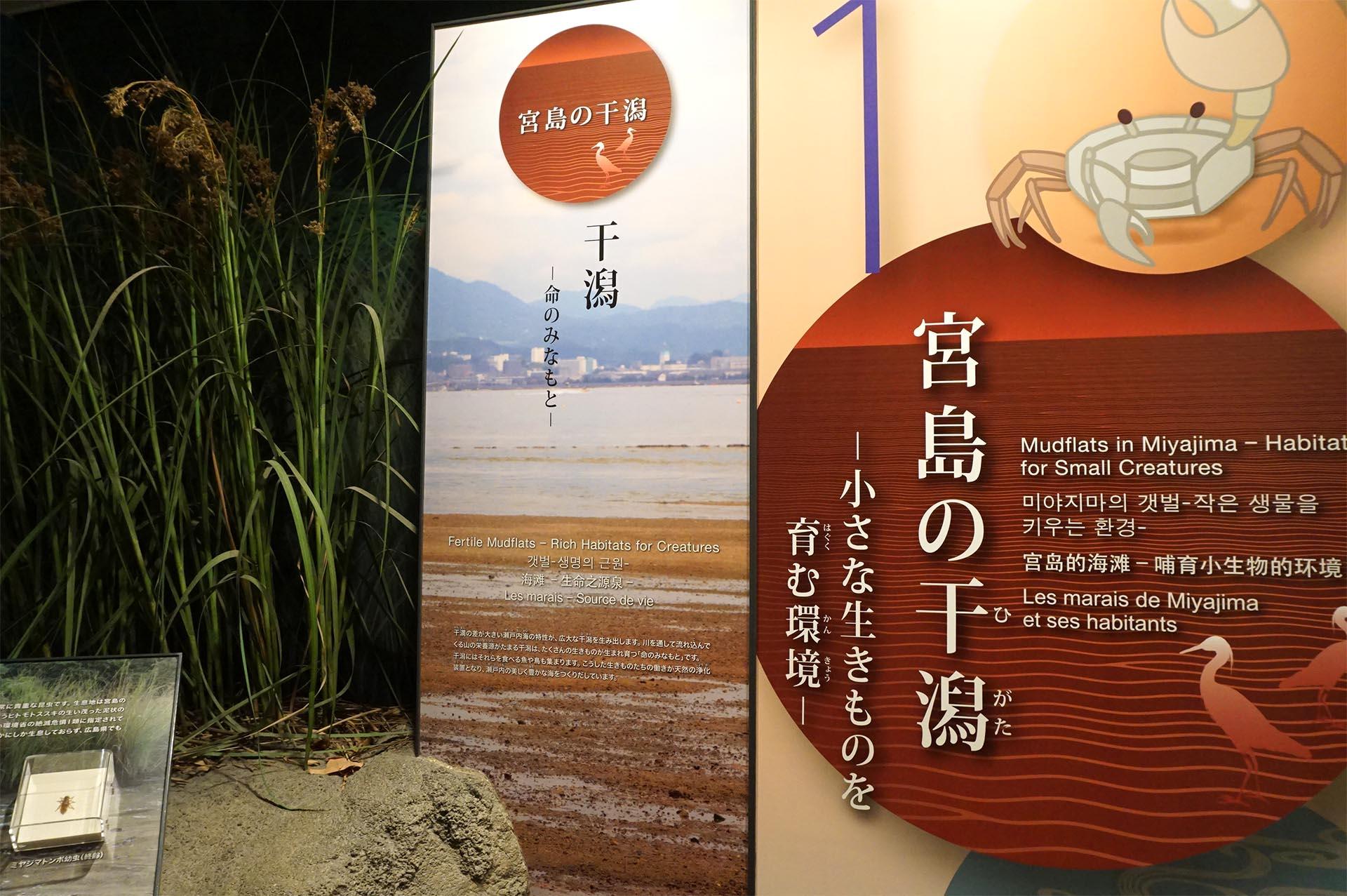 宮島水族館の干潟