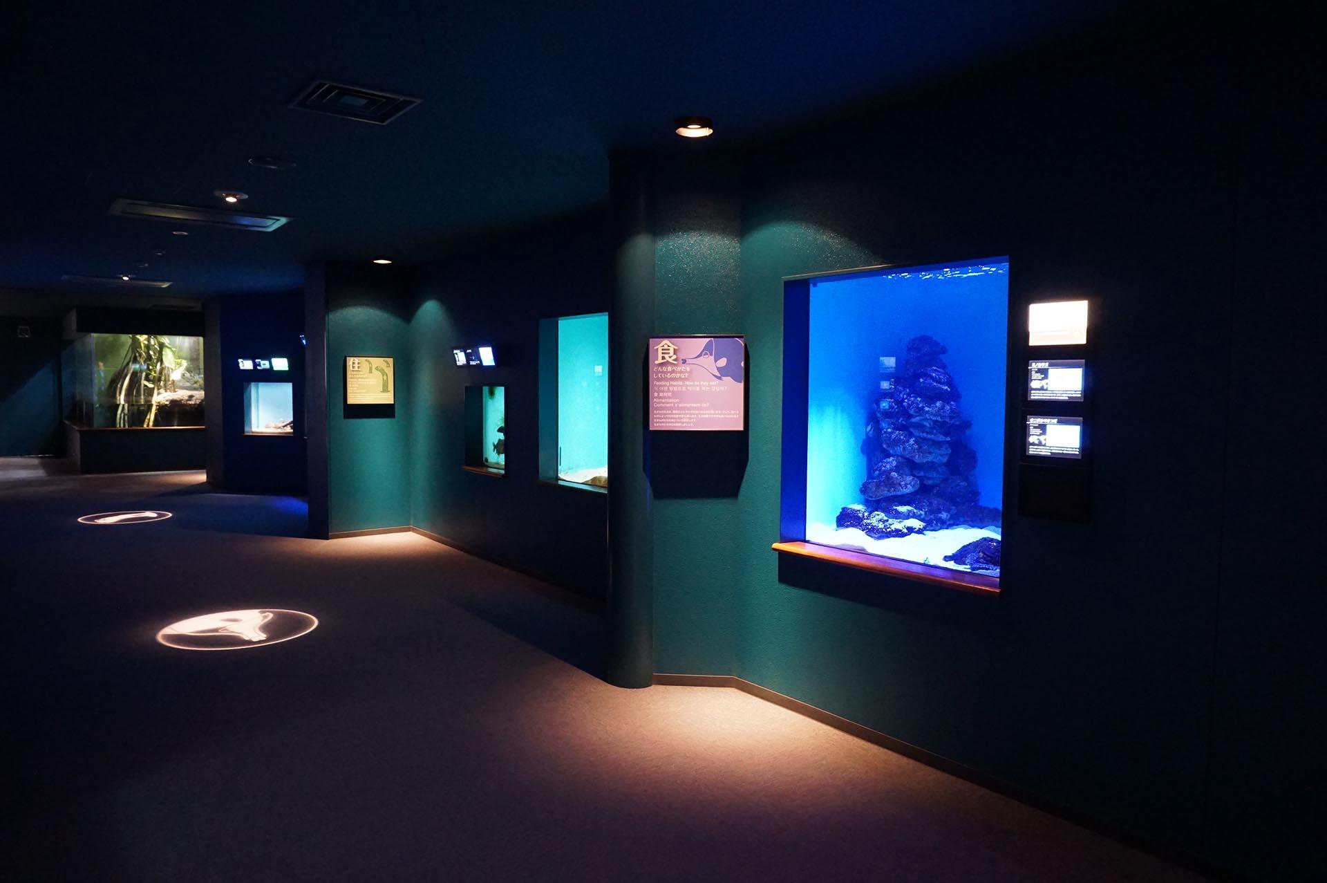 宮島水族館の館内