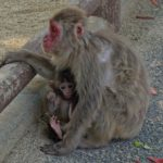 子供と大分県に旅行するならココ!高崎山自然動物園とうみたまごに行きました