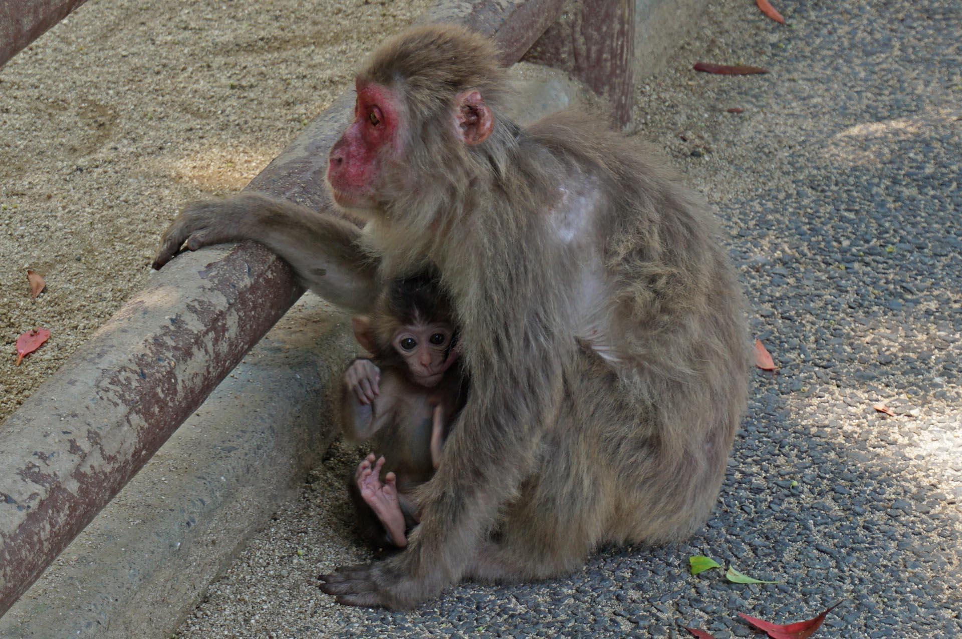 高崎山自然動物園の赤ちゃんザル