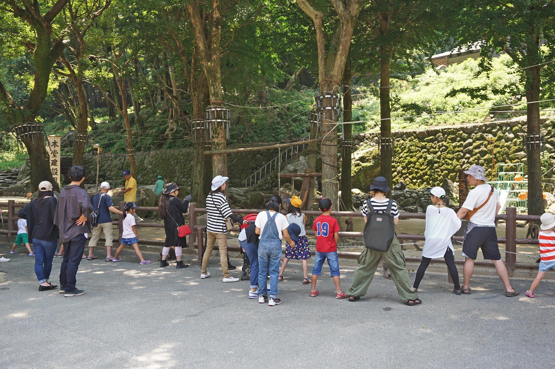 高崎山自然動物園のサルの股くぐり