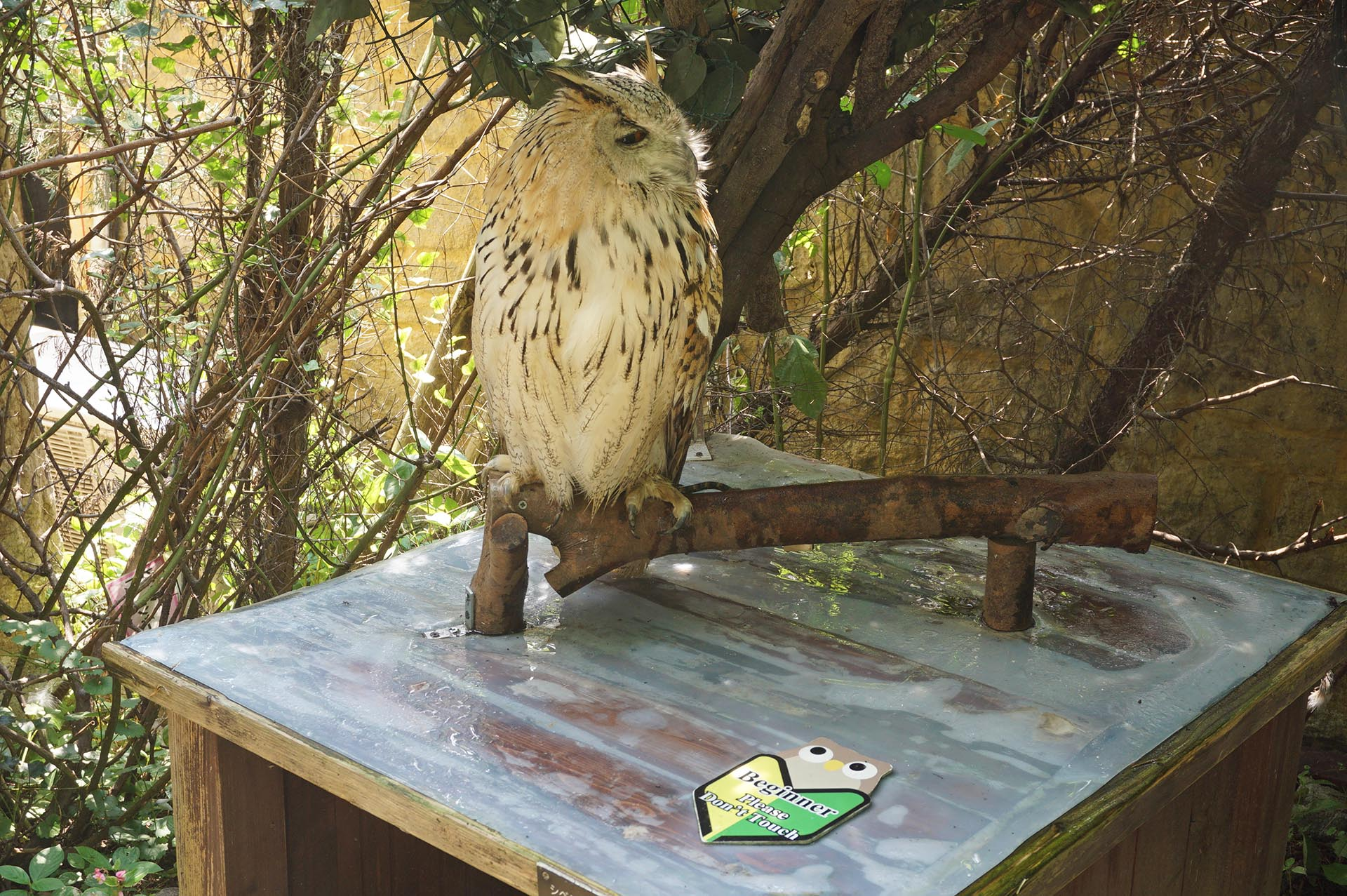 フクロウの森の初心者マーク